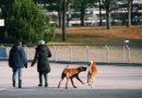 Symbolpolitik mit Hund