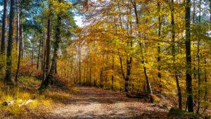 Pfaelzer Wald bei Hohe Loog.JPG